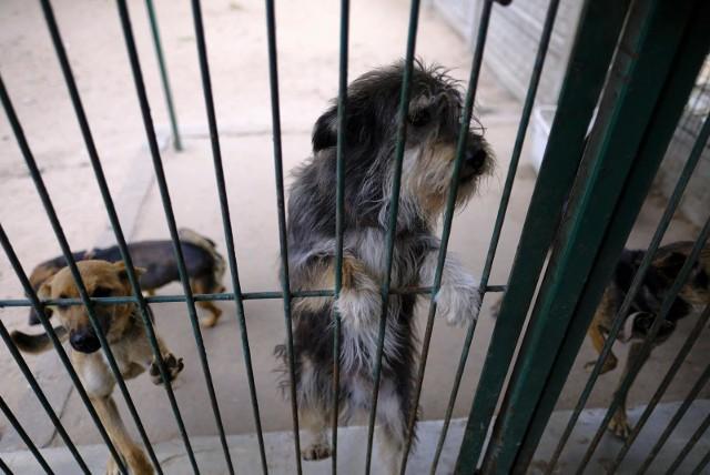 Psy w toruńskim schronisku czekają na pomoc