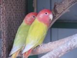 Wojnicz. Poczuj się jak na tropikalnej wyspie i zobacz najpiękniejsze ptaki egzotyczne!