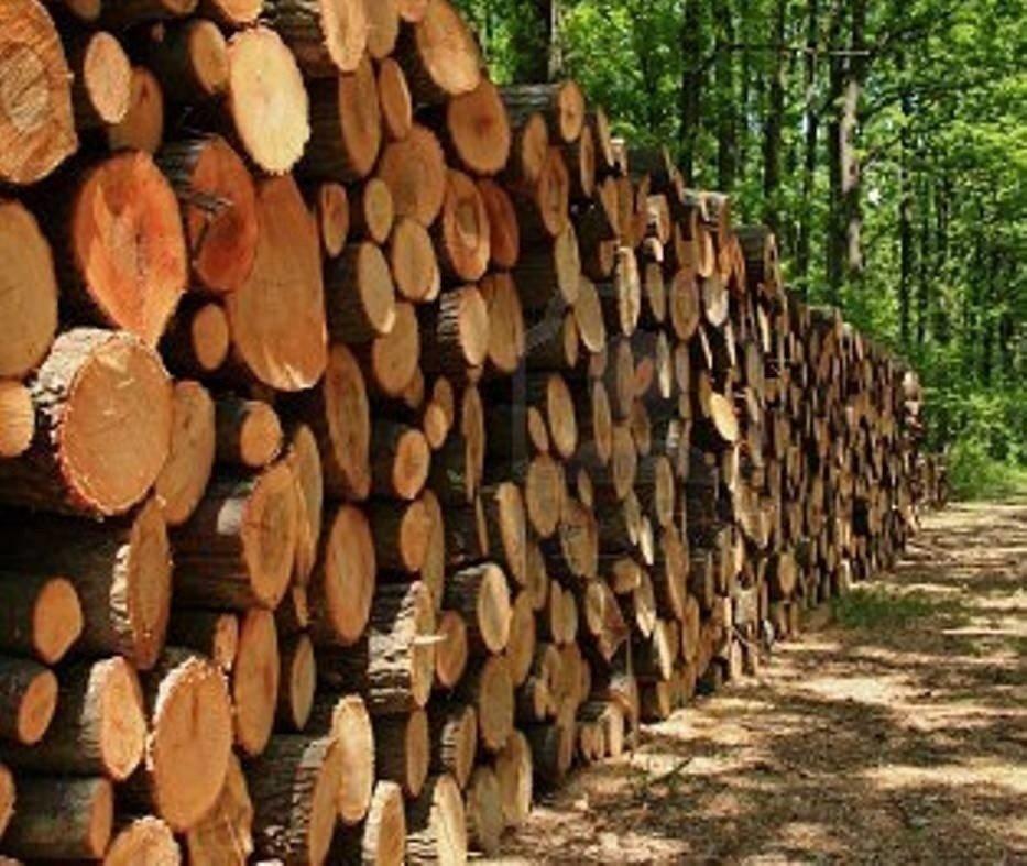 Bardzo dobra Dąb, olcha czy buk? Drewno kominkowe jest w cenie PORÓWNANIE CEN DP54