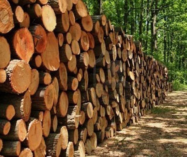 Ceny drewna kominkowego nie rosną drastycznie z roku na rok