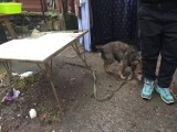 Sopocka straż miejska uratowała kilkanaście kotów oraz psy. Musiała interweniować policja