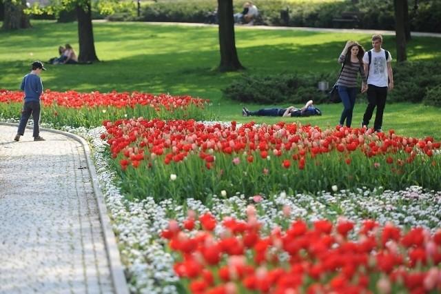 Wiosna w Poznaniu