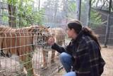 Wszystkie zwierzęta (i problemy) dyrektor Ewy Zgrabczyńskiej. Niedźwiedzie, wilki, lisy, tygrysy, lwy i na końcu walka o pumę