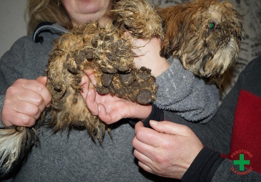 170 zwierząt pozamykanych w ciasnych klatkach, żyjących w...