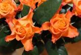 8 marca, Dzień Kobiet! Nie zapomnijcie złożyć życzeń...