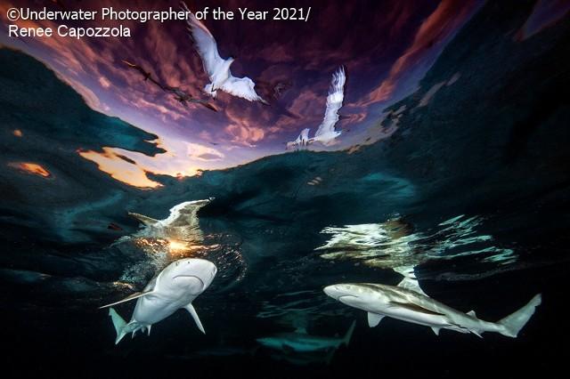 """Zwycięskie zdjęcie konkursu i zdobywca 1. nagrody w kategorii """"Szeroki kąt"""".Mówi się, że dna oceanów są zbadane w mniejszym stopniu niż Księżyc, przy czym woda zajmuje aż 71 procent powierzchni naszej planety. Nic więc dziwnego, że podwodny świat hipnotyzuje, zaciekawia i onieśmiela zarazem. Choć wydaje się odległy, bez oceanów człowiek nie mógłby istnieć. Niektórzy czują się z nimi na tyle silnie związani, że eksplorują podwodne głębiny, nierzadko wykonując zaskakujące zdjęcia. Te najlepsze są co roku nagradzane w konkursie """"Underwater Photographer Of The Year"""". Zobacz najlepsze fotografie z edycji 2021."""