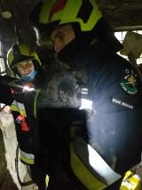 Strażacy ze Starego Gronowa wyciągnęli małego pieska … z komina (zdjęcia, film)