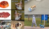 Oto najlepsze i najzabawniejsze PSIE MEMY. Zrozumie je każdy miłośnik psów!
