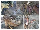 Saperzy przyjechali do pocisków. W ziemi znaleźli ludzkie szczątki (zdjęcia)