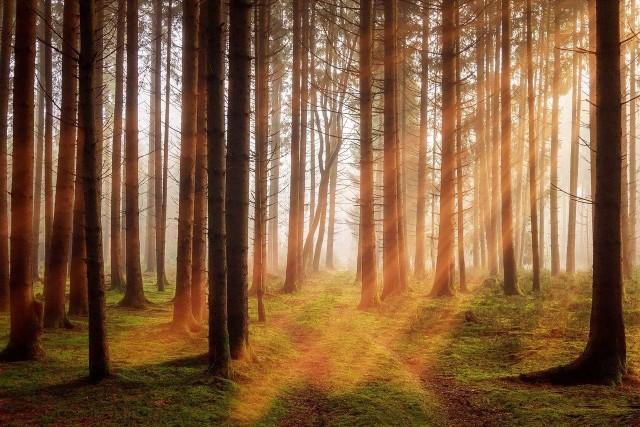 W październiku możemy w pełni cieszyć się urokami jesieni. Kasztany, kolorowe liście iii pylenie, które jest zmorą wszystkich alergików! Na co trzeba szczególnie uważać? Sprawdź kalendarz pylenia na październik 2021.