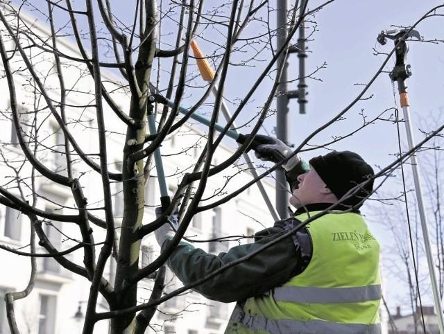 Drzewa na wiosnę trzeba doświetlić. Dlatego konieczne jest usuwanie niepotrzebnych gałęzi. Takie zabiegi były stosowane w poniedziałek przy lipach przy ul. Lipowej w Białymstoku. Ekipa z sekatorami przycinała, prześwietlała, usuwała suche i połamane badyle.