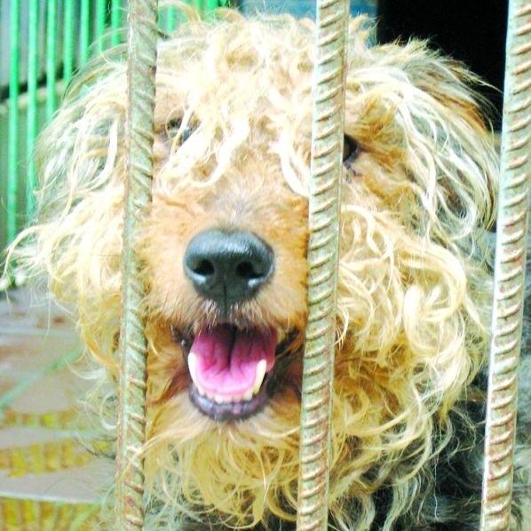Cudem uratowany przed tragiczną śmiercią Kudłaty