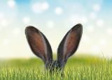 Wielkanocne gify z życzeniami 2021. Śmieszne gify na Wielkanoc 2021, MEMY. Zaskocz znajomych i zamiast życzeń wyślij śmieszne GIFY