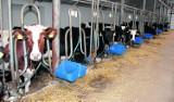 Gospodarstwa mleczne potrzebują pomocy