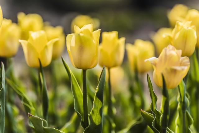 Piękne kwiaty kwitną w Magicznych Ogrodach w Trzciankach niedaleko Janowca