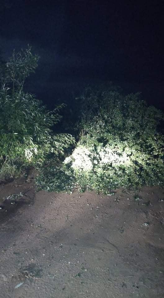 Okolice Kowal, strażacy OSP Suraż usuwali drzewa od godz....