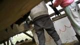 Szokujące nagrania z fermy norek: zwierzęta duszą się w agonii, niektóre są dobijane. Otwarte Klatki publikują film z gazowania zwierząt