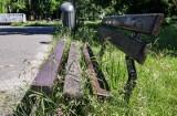 Mieszkaniec Łańcuta skarży się na wysoką trawę przy blokach. Spółdzielnia mieszkaniowa odpowiada, że ma harmonogram koszenia
