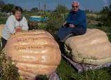 Majka waży 514 kilogramów. To największa dynia w historii Polski!