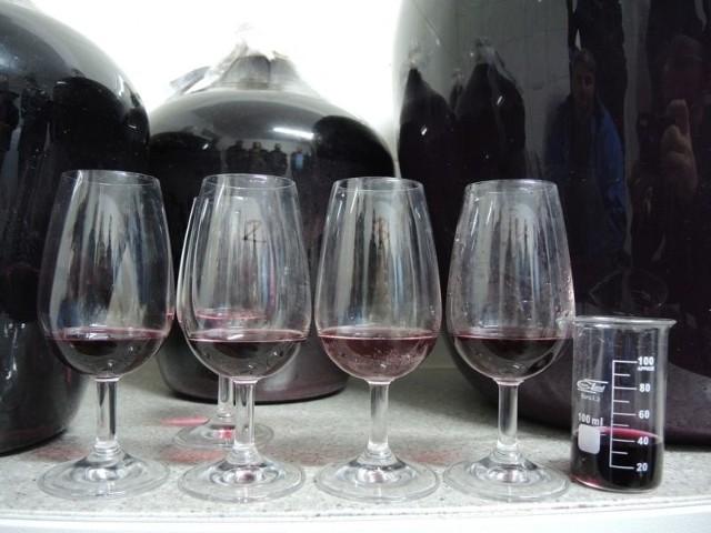 Zdecydowana większość podkarpackich winiarzy produkcję wina należy traktować jako hobby, a nie ewentualnie źródło utrzymania.