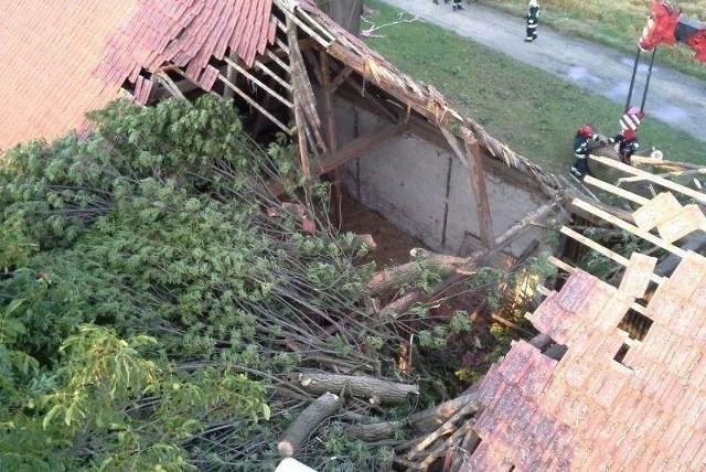 W Chróścicach ogromny jesion runął we wtorek na stodołę. Usuwało go pięć zastępów strażaków.