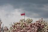 Kraków. Jak będą wyglądać uroczystości z okazji obchodów Narodowego Święta 3 Maja?