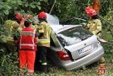 Ciemnoszyje. Wypadek na DK65. Kierowca trafił do szpitala (zdjęcia)
