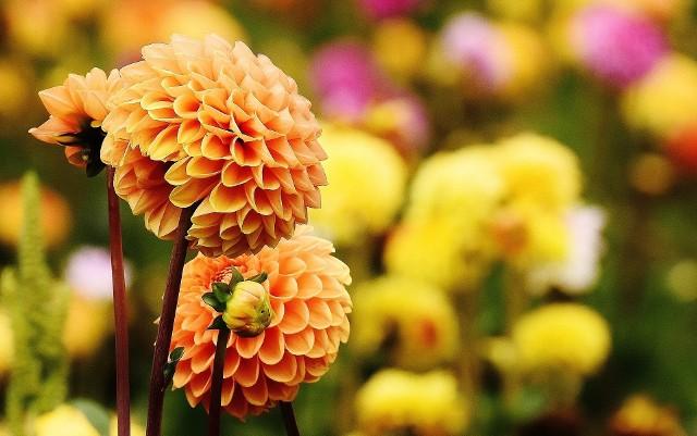 Zbliżająca się jesień to w kalendarzu ogrodników czas wzmożonej pracy.