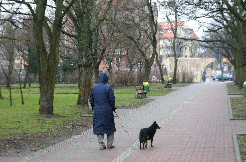 Spacer z psem w Parku Kultury i Wypoczynku.