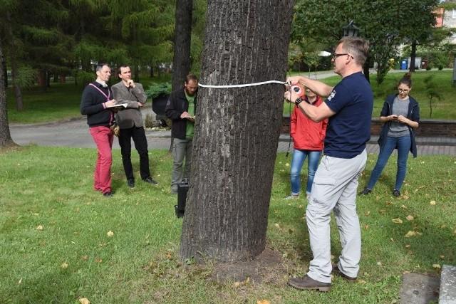 Tomograf zbada bytomskie drzewa. Miasto zakupiło specjalistyczne urządzenie. Zobacz kolejne zdjęcia. Przesuwaj zdjęcia w prawo - naciśnij strzałkę lub przycisk NASTĘPNE >>>