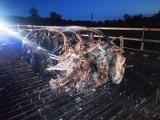 Śmiertelny wypadek na DW 504. Kierowca BMW spłonął w aucie (zdjęcia)