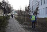 Zielona Góra: Przy szpitalu tymczasowym zniknęło ogrodzenie, ale za to pojawiły się drzewa