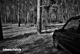 Nastolatkowie zgubili się w lesie w powiecie sulęcińskim. O zmroku natknęli się na wilki