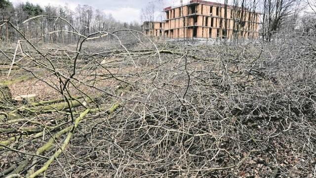 W Lesie Borkowskim wycinka trwa od tygodnia. Ma stąd podobno zniknąć nawet 500 drzew