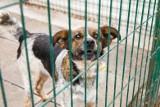 Schronisko dla Zwierząt w Białymstoku oferuje pomoc dla osób na kwarantannie. Pies może spędzić tam czas izolacji właściela