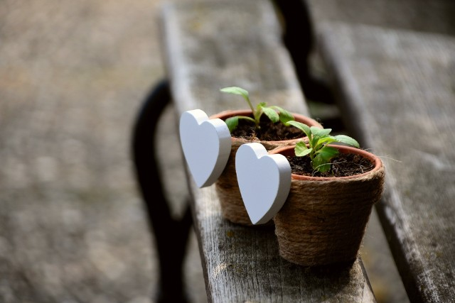 Oto rośliny domowe, które są uznawane za trujące. Zobacz szczegóły w dalszej części galerii >>>