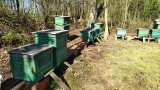 Poznań: Złodziej ukradł ule ze pszczołami z prywatnej pasieki. Wszystko wskazuje na to, że zrobił to inny pszczelarz