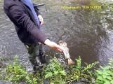 Katastrofa ekologiczna w rzekach Niechwaszcz i Wda. Miłośnicy przyrody załamują ręce, urzędnicy sprawdzają dokumenty [zdjęcia]