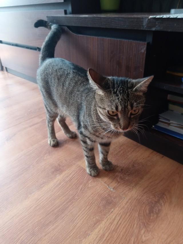 Mieszkanka Zduńskiej Woli wyrzuciła kota sąsiadki przez balkon. Najpierw cisnęła Maciusiem o barierkę, potem zrzuciła go  z trzeciego piętra. Kot doczołgał się do sąsiedniego bloku i zdechł. Właścicielka zwierzaka nie kryje łez.Do zdarzenia doszło w minionym tygodniu w jednym z bloków na osiedlu Tysiąclecia w Zduńskiej Woli. Starsza kobieta wyrzuciła kota z trzeciego piętra. Kot nie przeżył upadku.CZYTAJ DALEJ NA KOLEJNYM SLAJDZIE