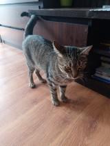 Wyrzuciła kota sąsiadki z balkonu! Zwierzę nie żyje!