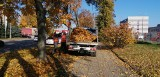 Tony liści trafiają codziennie do miejskiej kompostowni