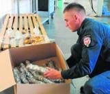 Przemyt bursztynu z Rosji na Pomorze kwitnie