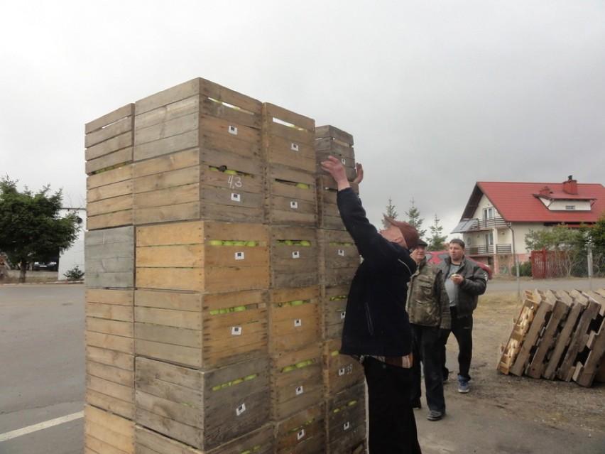 Kolejne tony jabłek rozdano w Niestępowie i okolicznych...