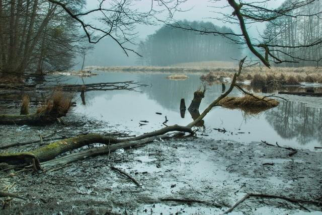 Zdjęcie z wędrówki wzdłuż rzeki Brdy