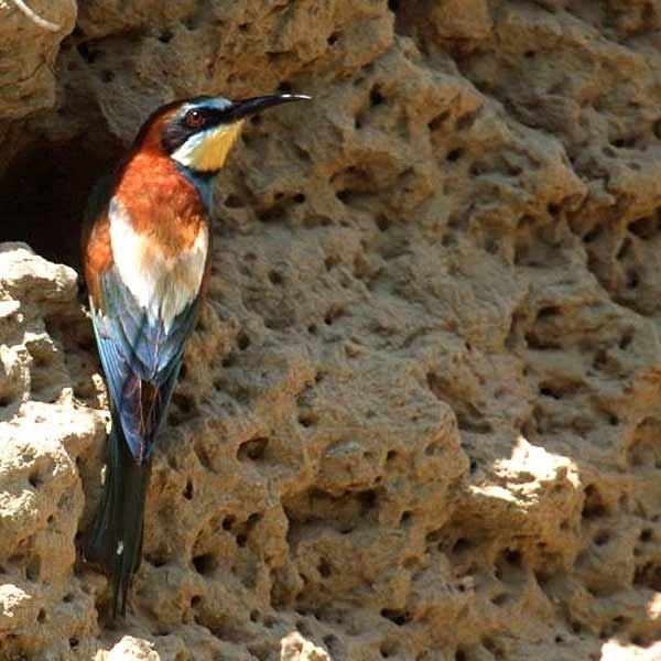 Żołna to w Polsce rzadki ptak. Zachwyca różnorodnością barw, charakterystyczną dla południowych ptaków. W Przemyślu i okolicach znajdują się najbardziej na północ wysunięte stanowiska lęgowe żołny.