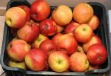 Łódź: Czas na cytrusy - pomarańcze tańsze niż jabłka - ceny w sklepach i na rynkach