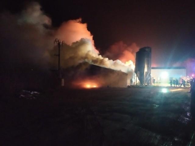 Duży pożar kurnika na Kaszubach. Bardzo duże straty.