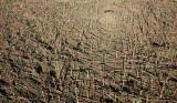 Ruszyły orzeszkowe żniwa. Po to, by odnowić zniszczone przez huragan lasy