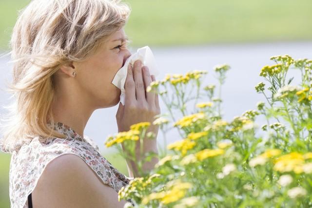 Sprawdź co kwitnie i szybko zdiagnozuj przyczynę alergii. Czerwiec to miesiąc w którym najwięcej objawów uczuleniowych dają kwitnące trawy. Ale nie tylko. Co właśnie teraz kwitnie i uprzykrza życie alergikom? Sprawdź na kolejnych slajdach, posługując się klawiszami strzałek, myszką lub gestami.Alergia na pyłki zalicza się do kategorii alergii wziewnych. Dlaczego? Alergen, w tym wypadku pyłek, trafia do organizmu drogami oddechowymi. Symptomy pojawiają gwałtownie i często występują od wczesnej wiosny do początków zimy. Typowymi objawami alergii wziewnych są: katar, zapalenie spojówek, utrudnione oddychanie.