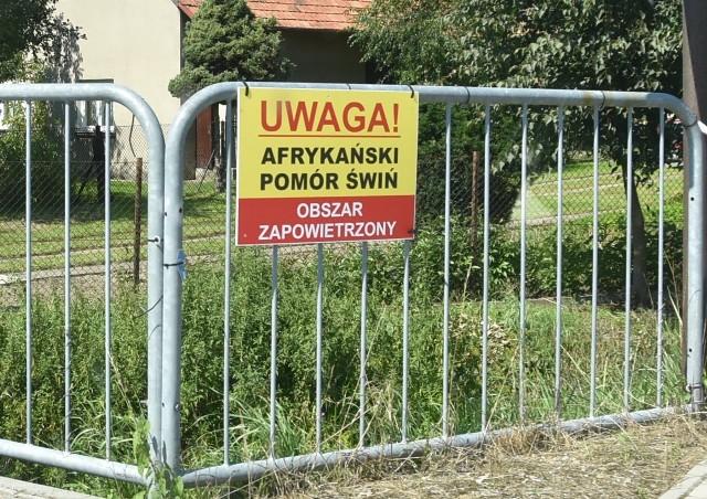 W związku z Afrykańskim Pomorem Świń obszar zapowietrzony na Powiślu Dąbrowskim został poszerzony